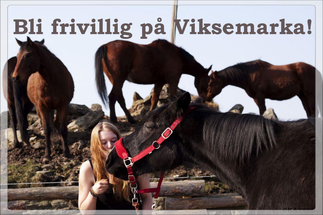 Frivillig - slide